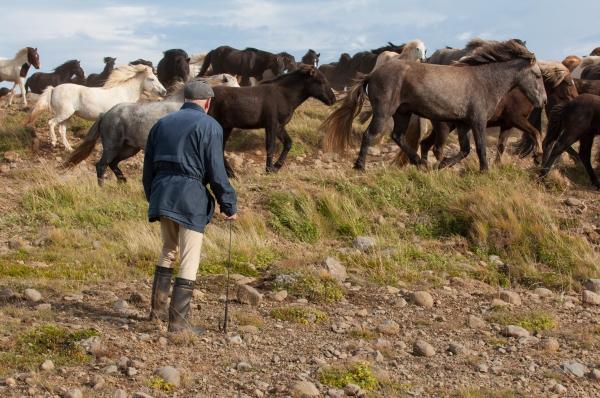 Islande 3.jpg