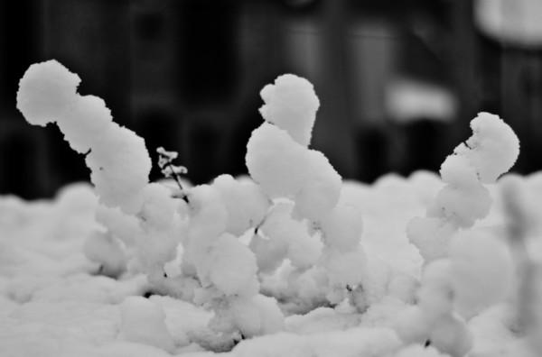 neige.jpg.a112846db0cd0becfcb1f404cab62a96.jpg