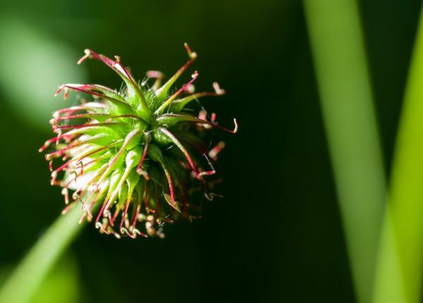fleur.thumb.jpg.3525882438102fa9a2fa37ee90879534.jpg
