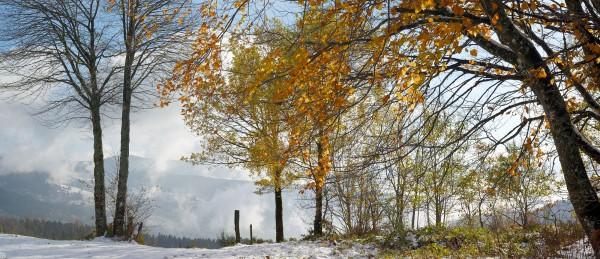 5a1fe89273253_Panorama-Haut-du-TT.thumb.jpg.1424a0fb30089fc698bf072340cf147f.jpg