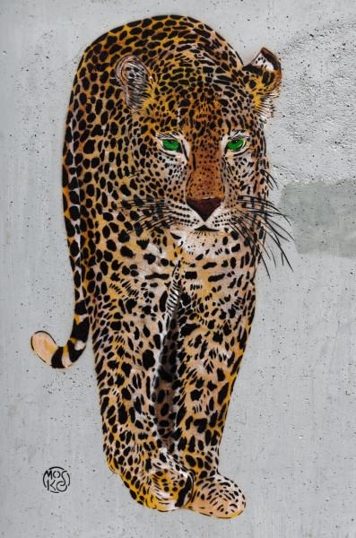 Jaguar.thumb.jpg.56b0391c05f2650d1522666b67a1e0d8.jpg