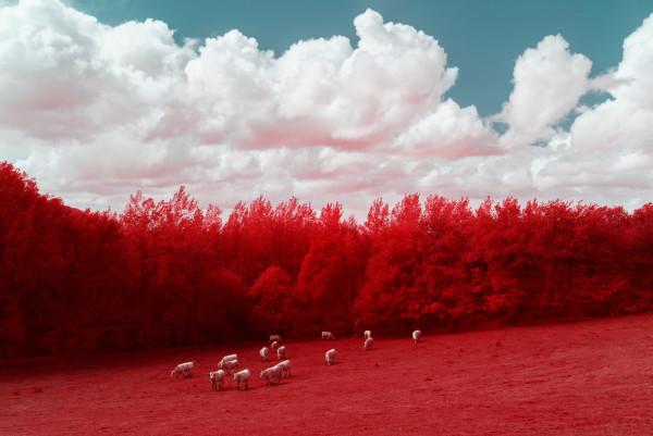 les-vaches-bretonnes-voient-rouge (4).jpg